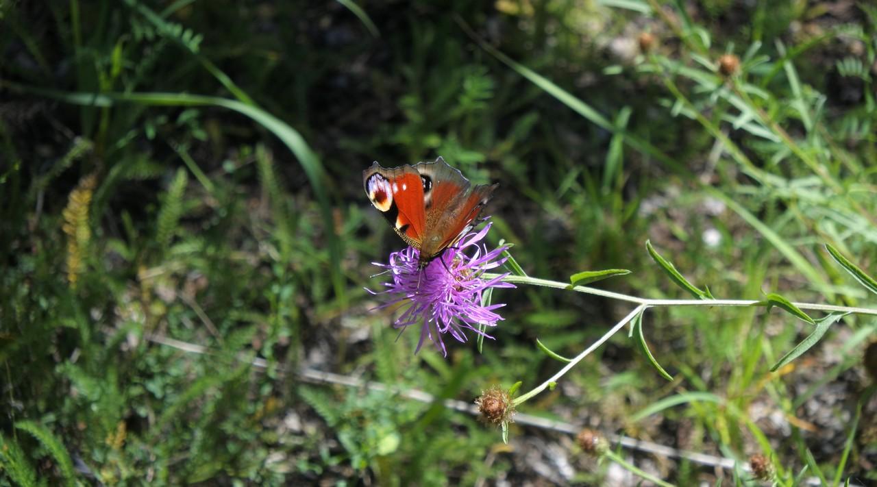 Insectes Papillons Sclaigneaux